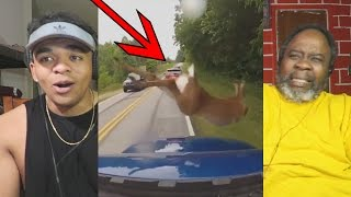 Download Dad Reacts to Deer vs Cars || Ultimate Dash Cam Fails Compilation Video