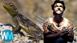 Download Top 10 Most Incredible Animals with Legit Superpowers Video