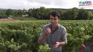 Download Vidéo la route du Champagne, tourisme autour de Reims. Video