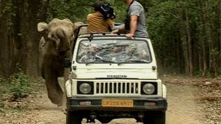 Download Wild Elephants Charge after Camera Crew | Deadly 60 | Earth Unplugged Video