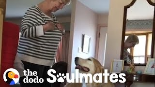 Download This Golden Retriever Insists on Visiting His Favorite Neighbor Every Day | The Dodo Soulmates Video