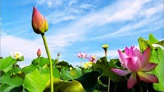 Download Nhạc Thiền Phật Giáo - Giúp ta Tĩnh tâm, thư thái, thanh thản, an nhiên - Nhạc Không Lời Hay Nhất Video