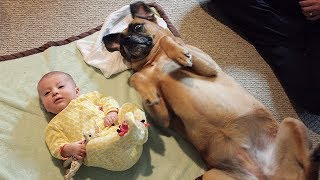 Download CUTE Babies and Dogs Doing Funny Things - Funny Dog and Baby Videos Ever Video