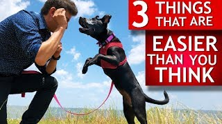 Download 3 Easy Things to Teach Any Dog That Most People Think Are Hard (Teeth brushing, let go of toys...) Video