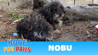 Download When kids found this dog, they thought he was dead! Video