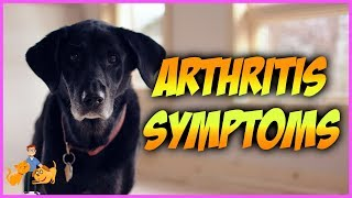 Download How Can You Tell if Your Dog has Arthritis: top 10 symptoms Video