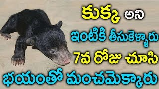 Download కుక్కఅని ఆడుకుంటూ ఉన్నారు అదేంటో తెలిసి గజగజ వణికిపోయారు   Bear Turns into Dog   Suamntv videos Video
