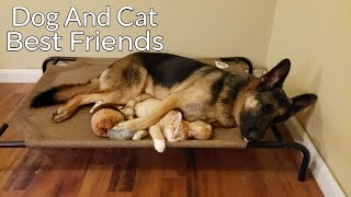 Download How a German Shepherd and a Kitten Became Best Friends Video