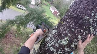 Download HIGH CLIMBING TREE TOPPING Video