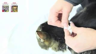 Download Flea & Tick Collar for Cats Video
