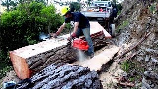 Download Felling a big pine tree & milling slabs with a portable Chainsaw Mill Video