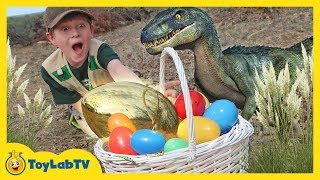 Download Golden Easter Egg Hunt! Dinosaur Surprise Toys Challenge & T-Rex Chase for Kids | ToyLabTV Video