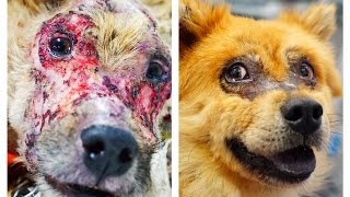 Download DOG CHASED BY PEOPLE BECAUSE HE LOOKED LIKE A MONSTER TURNS INTO A REAL BEAUTY ! Please Share Video