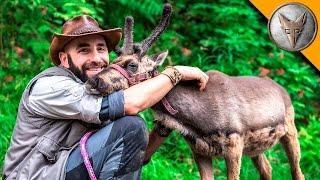 Download Baby Reindeer Loves Hugs! Video