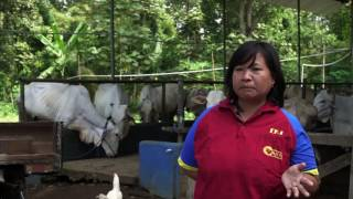 Download Ternak Harapan (Cattle of Hope) – Bahasa Indonesia Subs Video