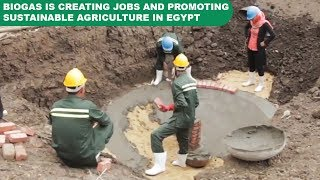 Download How biogas is creating jobs and promoting sustainable agriculture in Egypt Video