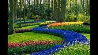 Download Vinegar🍶सिरके का बागबानी मे 👈प्रयोग||Vinegar use in Gardening||Easy gardening SKILLS Video
