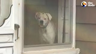 Download Dog Stalks His Owner From Every Window   The Dodo Video
