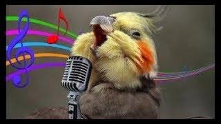 Download Os Pássaros Mais Engraçados do MUNDO #2 Video
