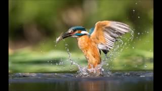 Download Gary Jones Wildlife Photography 2016 Review Video
