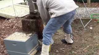 Download Part 2 duck box bees Video