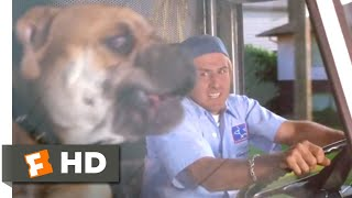 Download See Spot Run (2001) - Whose Dog Is That? Scene (5/8) | Movieclips Video