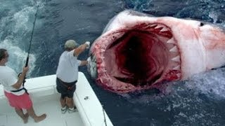 Download GOD SAVES MAN FROM GREAT WHITE SHARK ATTACK Video