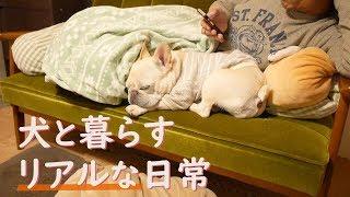 Download フレンチブルドッグの1日に密着 ~犬と暮らす幸せ~ Video
