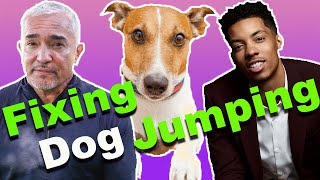 Download How To Stop A Dog From Jumping (Ft.Melvin Gregg) Video