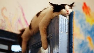 Download These SLEEPY and CLUMSY CATS and DOGS will make your day - Funny and cute cats and dogs compilation Video