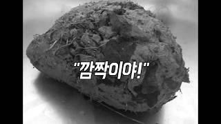 Download 개가 물어온 괴상한 진흙 덩어리 속을 열어 봤는데...[M+STORY] Video