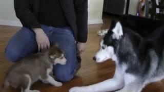 Download Laika meets Mishka & Moki! Video
