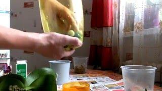 Download Реанимация орхидеи с гнилыми корнями Video