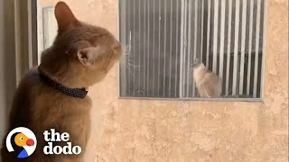 Download Cats Fall In Love After Seeing Each Other Through a Window Every Day | The Dodo Video