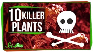 Download 10 Plants That Could Kill You Video