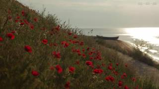 Download Relaxing Sounds at Seashore with Calm Waves and Light Wind Blowing Through the Red Poppies - 4K Video