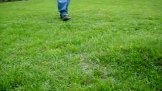 Download WATER BUBBLE Under GRASS in Northwest Alabama Video