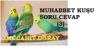 Download MUHABBET KUŞU SORULARINIZIN CEVABI (3) Video