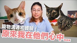 Download 寵物溝通初體驗!貓咪心海底針啊...【好味貓日常】EP10 Video