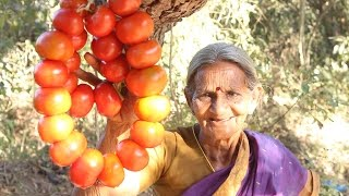 Download Tomato Pickle Andhra Style by my Grandma    Myna Street Food    Food Info Video