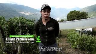 Download Cosechando frutos de paz Video