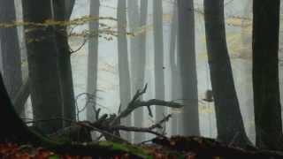 Download UNIVERSUM Zurück zum Urwald - Nationalpark Kalkalpen Video