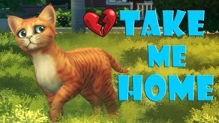 Download POOR LITTLE KITTEN SAD STORY | TRY NOT TO CRY Video