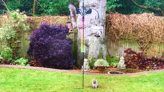 Download Amazing Squirrel Proof Bird Feeder Spectacularly Fails Video
