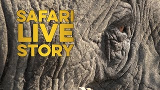 Download safariLIVE Story: Jamie and the Elephants Video