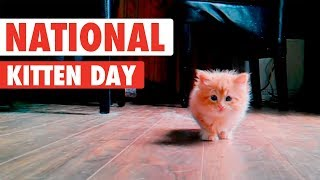 Download Most Adorable Kittens | National Kitten Day 2017 Video