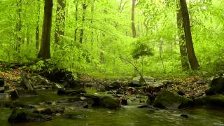 Download 60 minutes of Woodland Ambiance (Nature Sounds Series #4) Trickling Stream & Birds Sounds Video