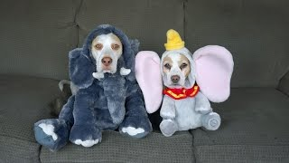 Download 17 Dog Costumes for Halloween: Funny Dogs Maymo & Penny Video