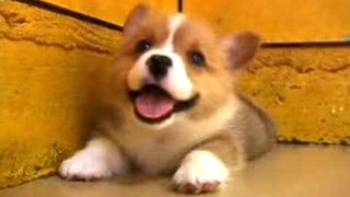 Download Puppies Barking - A Cute Dogs Barking Videos Compilation [CUTE] Video
