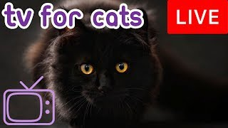 Download TV for Cats! Combat Boredom and Anxiety with Cat TV and Music! Video